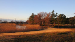 早朝の風景3