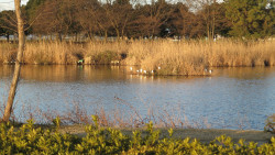 沼の鳥たち